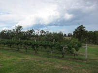 Vines of Hunter Valley